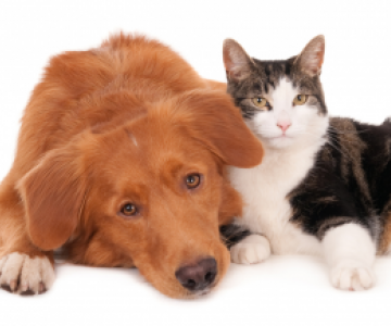 calico cat_and cute puppy