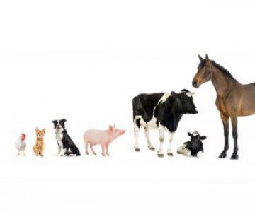 Cat, dog, pig, cow, horse