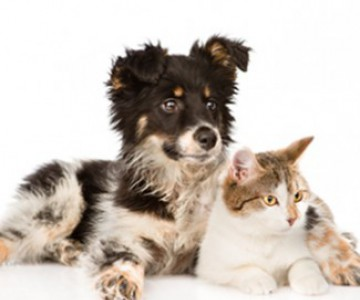 mixed breed dog and cat looking away